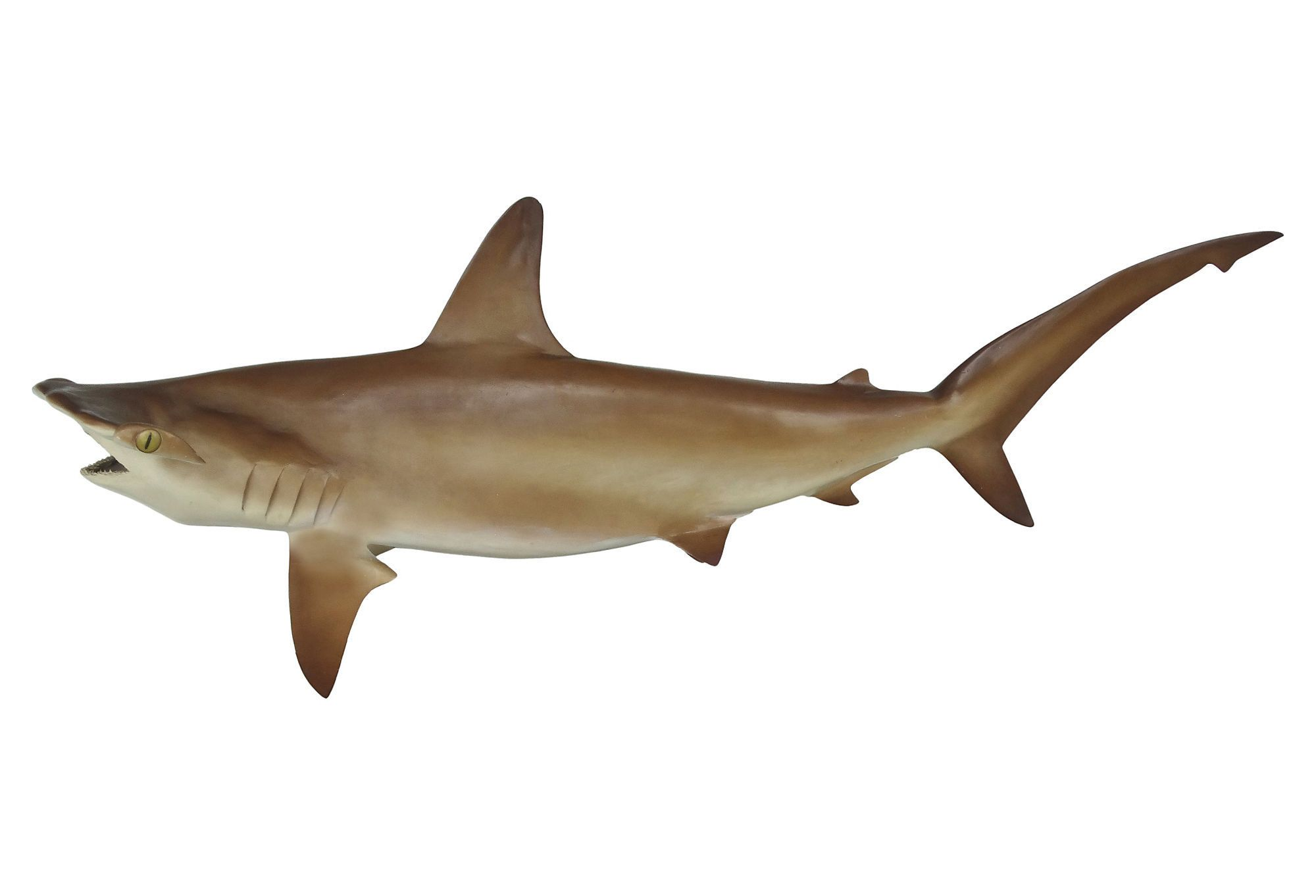 Full Size Taxidermy Hammerhead Shark Mount Modernism